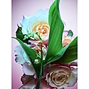 Rose Goldea Blossom Delight Eau de Parfum, ${color}