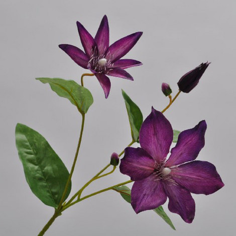 Clematis Stem 67cm, ${color}