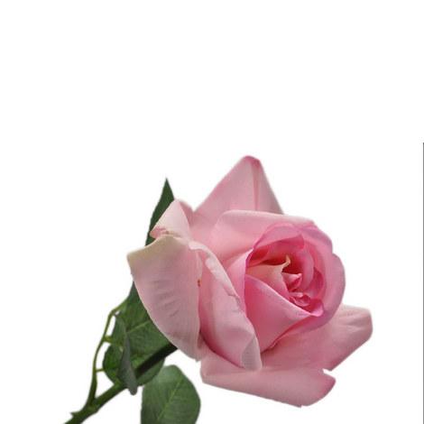 Rose Bud, ${color}
