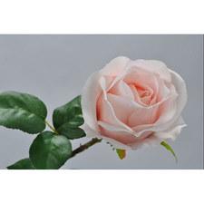 Peach Rose Spray