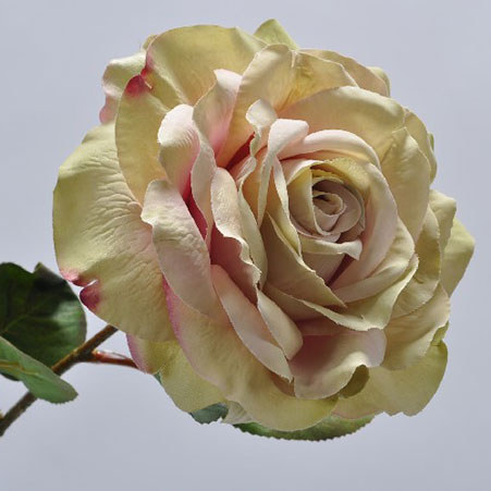 Rose Stem Pack 45cm, ${color}