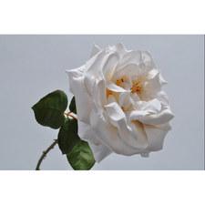 Silk Rose Stem
