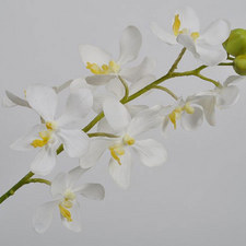 Orchid Spray 58cm