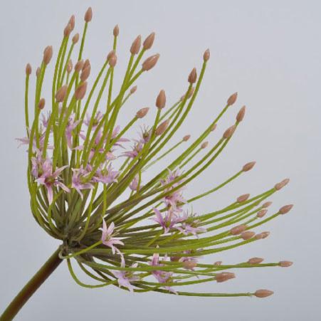 Allium Spray 53cm, ${color}