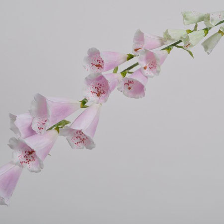 Digitalis Spray 108cm, ${color}