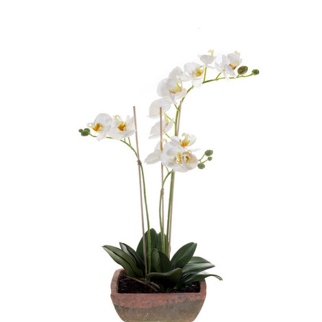 Phalaenopsis Artificial Plant 50cm, ${color}