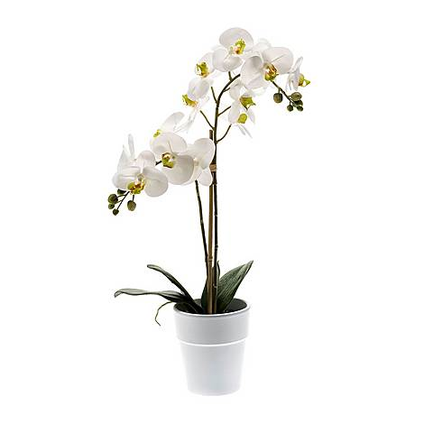 Potted Phalaenopsis Plant, ${color}