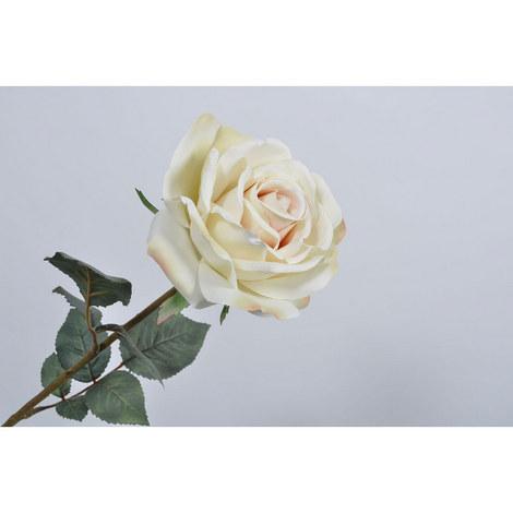 Silk Rose, ${color}