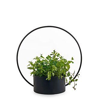 O Collection Pot