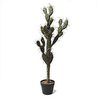 Aztec Cactus Large