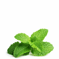 Three Peppermint Pods