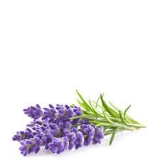 Three Lavender Pods